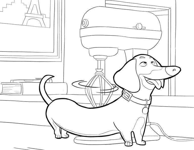 Buddy, de Pets, para colorir