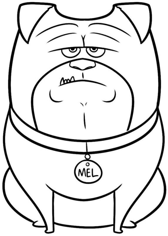 Desenho de Mel, o pug de Pets, para colorir